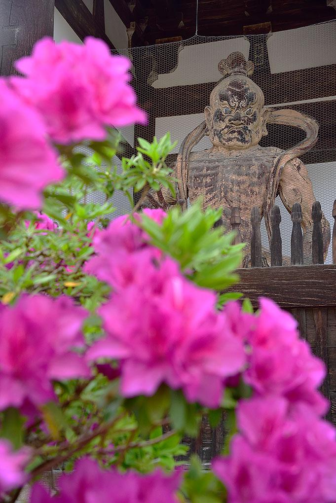 當麻寺の牡丹