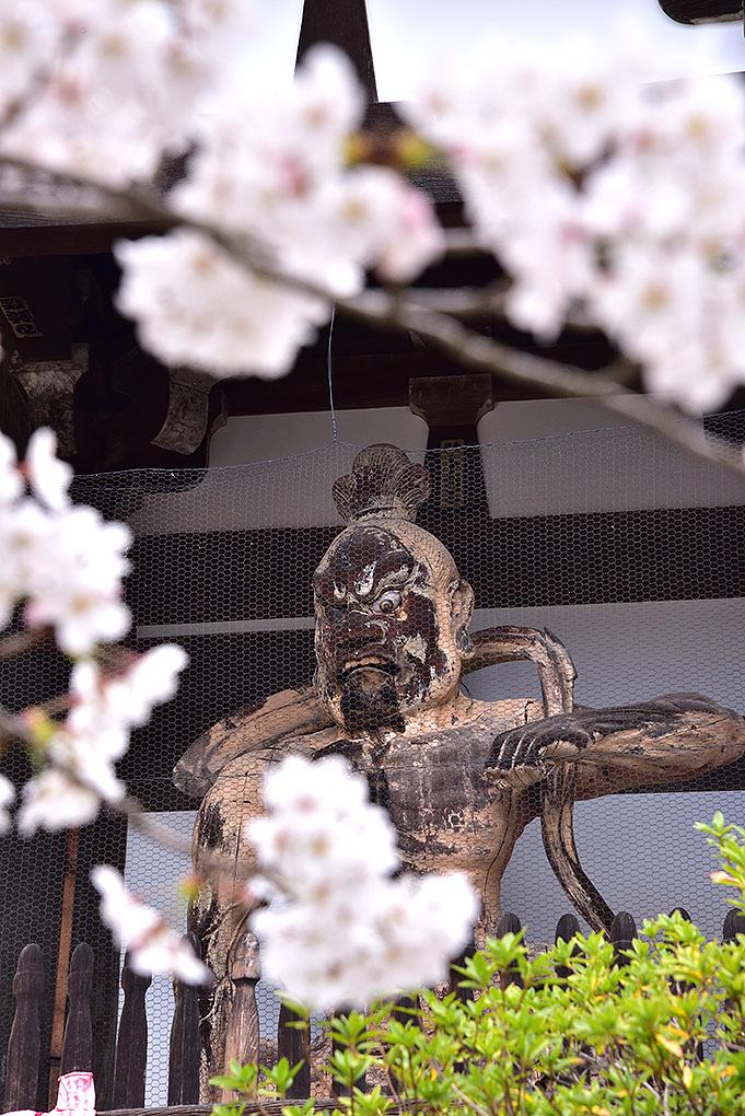 當麻寺阿形像と桜