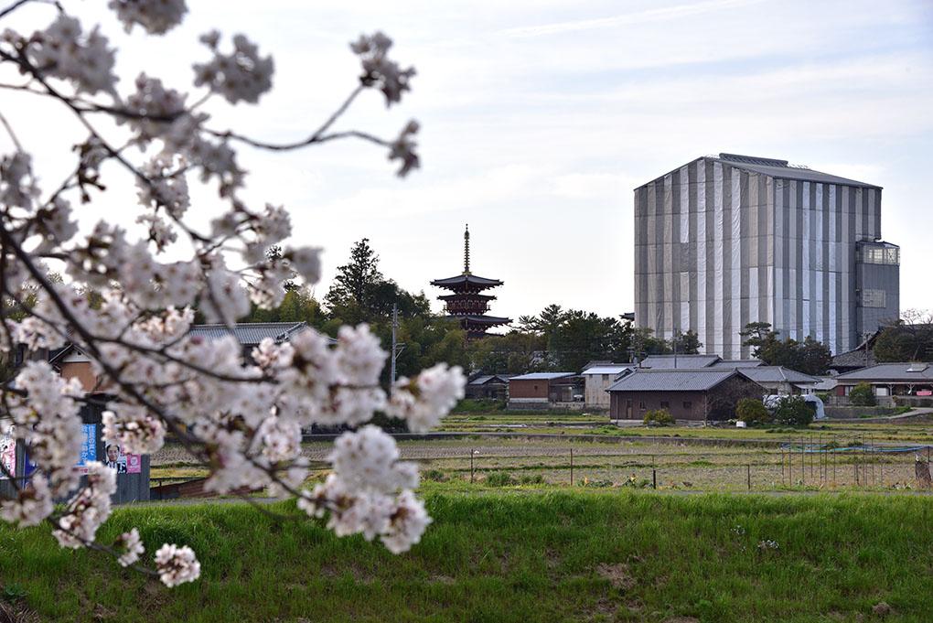 秋篠川から望む薬師寺