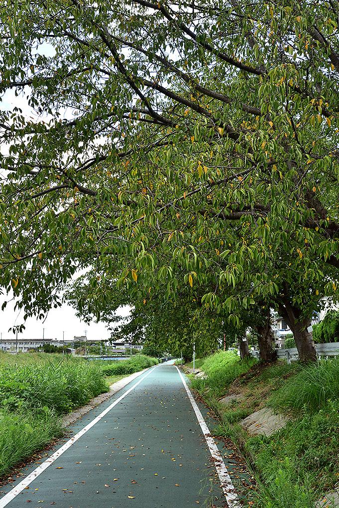 富雄川の桜並木